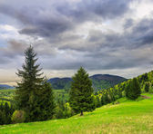 Coniferous forest on a  mountain slope — Стоковое фото