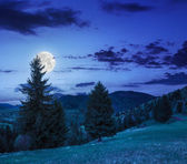 Coniferous forest on a  mountain slope at night — Foto Stock