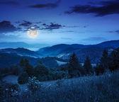夜の山の斜面上における針葉樹林 — ストック写真