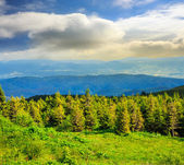 Coniferous forest on a  mountain slope — Foto de Stock