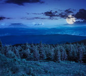 Coniferous forest on a  mountain slope at night — Foto de Stock