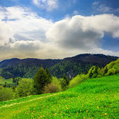 Trees near valley in mountains   — Stockfoto