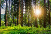 Forest glade in  shade of the trees at sunset — Stock Photo