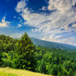 Coniferous forest on a mountain slope — Stock Photo #49492553
