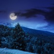 Coniferous forest on a mountain slope at night — Stock Photo #49492599