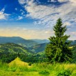 Coniferous forest on a  mountain slope — Stock Photo #49492661
