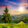 Coniferous forest on a  mountain slope at sunset — Stock Photo #49492689
