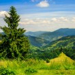 Coniferous forest on a  mountain slope — Stock Photo #49492733
