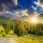 Going to coniferous forest at sunset — Stock Photo