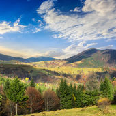 Village on hillside meadow with forest in mountain — Stok fotoğraf
