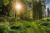 Forest glade in  shade of the trees in sunlight — Stock Photo