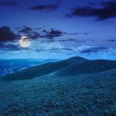 Plantes sauvages élevés au sommet de la montagne dans la nuit — Photo