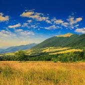 Trees near valley near a mountain foot — Stock Photo