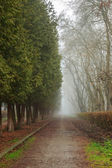 Road In Mysterious a bit creepy and misty Park — Foto de Stock