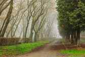 Road In Mysterious a bit creepy and misty Park — Stock Photo