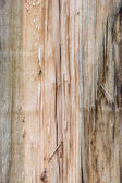 Cracked and knotty wood texture — Stock Photo