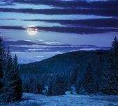 Naaldhout bos op een berghelling bij nacht — Stockfoto
