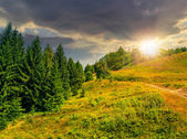 Coniferous forest on a  mountain slope at sunset — Foto Stock