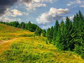Naaldhout bos op een berghelling — Stockfoto