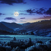 Field near home at night — Stock Photo