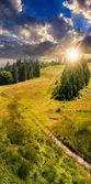 Bosque de coníferas en la ladera de una montaña al atardecer — Foto de Stock