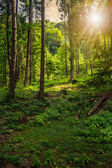 Forest glade in  shade of the trees at sunset — Foto Stock