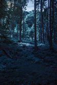 Forest glade in  shade of the trees at night — Foto Stock