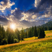 Coniferous forest on a  mountain slope at sunset — Stock fotografie