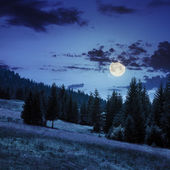 Coniferous forest on a  mountain slope in moon light — Stock fotografie