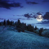 Pine trees near valley on mountain slope at night — Stock Photo