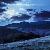 Trees near valley in mountains  on hillside in moon light — Stock Photo