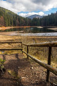 Pine forest and lake near the mountain — Stock Photo