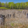 Early Spring at the Marsh — Stock Photo