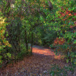 Enchanted Autumn Path — Photo