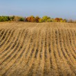 Furrowed Plowed Field in Late Autumn — Stock Photo