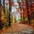 Enchanted Minnesota Forest Path in Indian Summer - Stock Photo