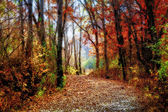 Enchanted Minnesota Forest Path in Indian Summer — Stok fotoğraf
