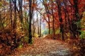 在印度夏季魔法的明尼苏达森林路径 — 图库照片