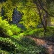 Stock Photo: Sunlit Path at Chantry Flats in Early Morning