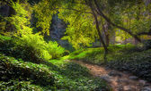 Sunlit Path at Chantry Flats in Early Morning — Stock Photo