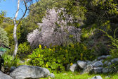 Blooming Tree in Early Spring at Chantry Flats — Stock Photo