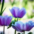 Three Pastel Flowers — Stock Photo