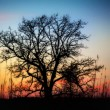 Sunset Through the Barren Trees — Stock Photo #14699813