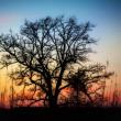 Sunset Through the Barren Trees — Stock Photo