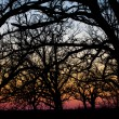 Sunset Through the Barren Trees — Stock Photo