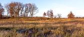 второй половине дня в прерии midwest в ноябре — Стоковое фото