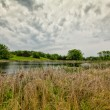 Stock Photo: Natural Wetlands at Sibley State Park, Minnesota
