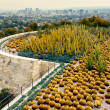 Постер, плакат: Cactus Garden of The Getty Center with West Los Angeles in Backg