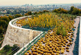 Cactus Garden of The Getty Center with West Los Angeles in Backg — Stock Photo