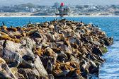 Sea Lions at Rest — Zdjęcie stockowe